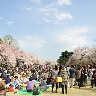 Photo:Shinjuku-Gyoen By:yoppy